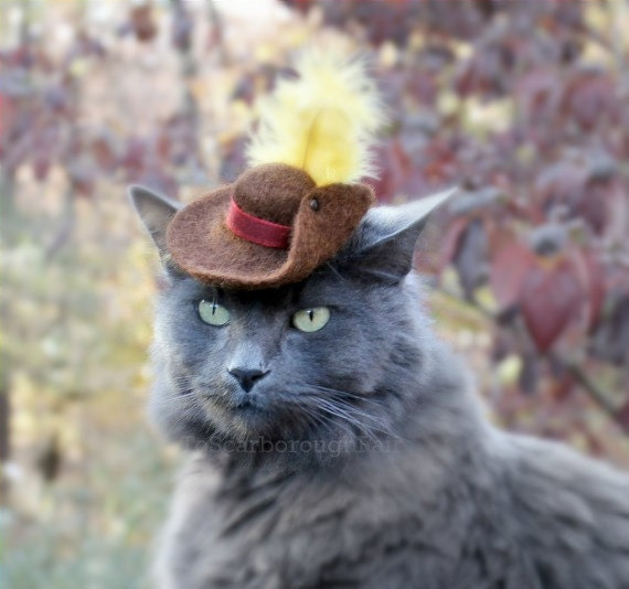 how to make a hat for your pet cat