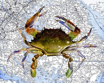 Blue Crab Watercolor Print on 8 1/2 X 11 Best Maryland / Delaware Chesapeake Bay Map by artist Barry Singer