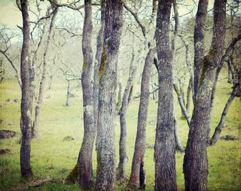 "Forest Landscape - Woodland Wall Art - Nature Photography - Gray Green Decor - Oak Tree Print - Rustic Living Room Art ""Greenwood"""