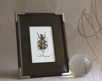"Martinefa's Original watercolor and Ink - "" Insect #2"""
