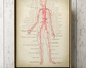 ANATOMY PRINT, Anatomy Poster, Anatomical Drawing, Scientific Illustration, Medical Wall Art, Anatomy chart, Circulatory System