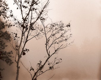 """Landscape photography foggy lake bare branches silhouette mist spring - """"Lost in the fog"""" 8 x 10"""