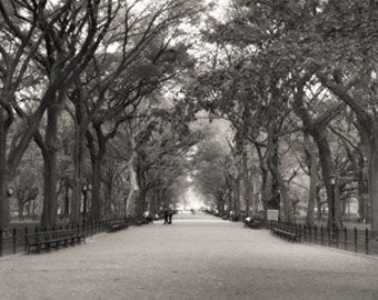Wall art - Central Park - Photography - Gift -  Print - Poster -  Photograph - Photo -  Black and White