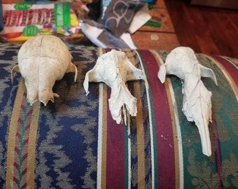 skull pieces