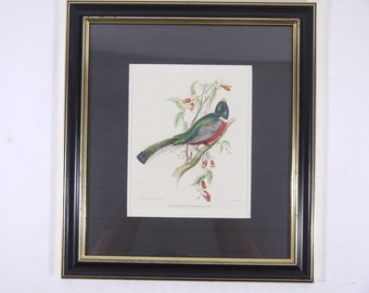 J&E Gould Drawn Bird Art Print Trogon Ambiguus Hullmandel Framed Victorius