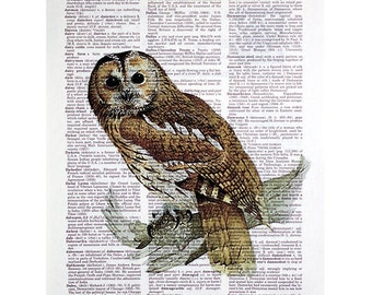 Tawny Owl Vintage Print On An Antique Dictionary Page