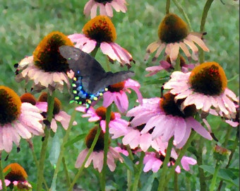 Butterflies Free Shipping in USA