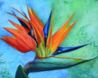 """Bird of Paradise,fine art giclee reproduction of an original watercolor painting by Meike Geisler;10""""x14"""" flower,reds,yellows,blues,greens"""