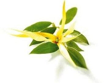 YlangYlang - Essential Oil - 5ml