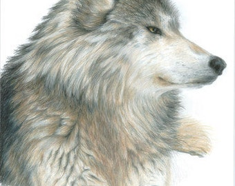 Wolf Art Original Artwork by Carla Kurt