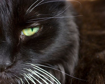 Black Cat Art, Black Cat Print,  Halloween Cat Photography, Animal Art
