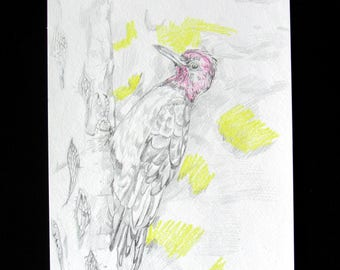 Woodpecker Pencil and Color Pencil Drawing