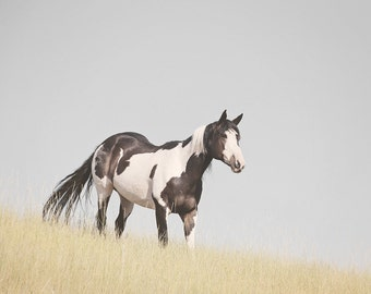 Paint Horse Photograph in Color, Horse Print, Equestrain Home, Physical Print