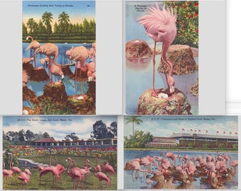 Pink Flamingos Nesting, Parrot Jungle, Hialeah Park, Miami, FL, Set of 4, Digital Postcards, Old Florida, Instant Download Printable Art