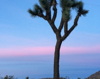 Joshua Tree California - Joshua Tree Landscape- Blue Pink Sky- Photo Blank 4x6 Greeting Card-Suitable for Framing-Copyright Protected