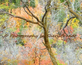 "Fall Spectrum - ""12 x 18"" Signed Fine Art Photograph"