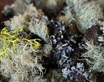 1oz Real Lichen - Organic, Sustainably Harvested Real Lichen, Moss, Wildcraft for Crafting, Miniatures, Decor - Usnea laponica LCH007