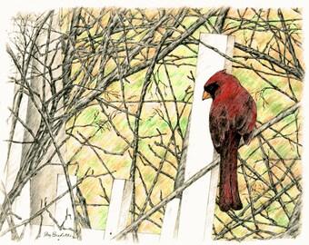Cardinal in Autumn, Original Colored Pencil Drawing, Wall Art