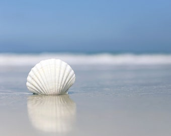 White Seashell Beach Photography Carlsbad California Photo Blue Seascape Wall Art Living Room Decor Calming Picture Ocean Shell Coastal Art