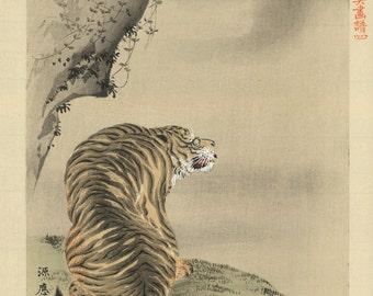Japanese Art. Fine Art Reproduction. The Tiger, c. 1890: Fine Art Print