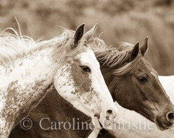"""Wild Horse Photography,Equine Photos, Sepia Tone, Mustangs. Black Stallion. """"Just the two of us"""""""