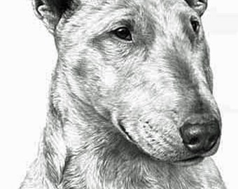Bull Terrier, Fine Art Print by Mike Sibley