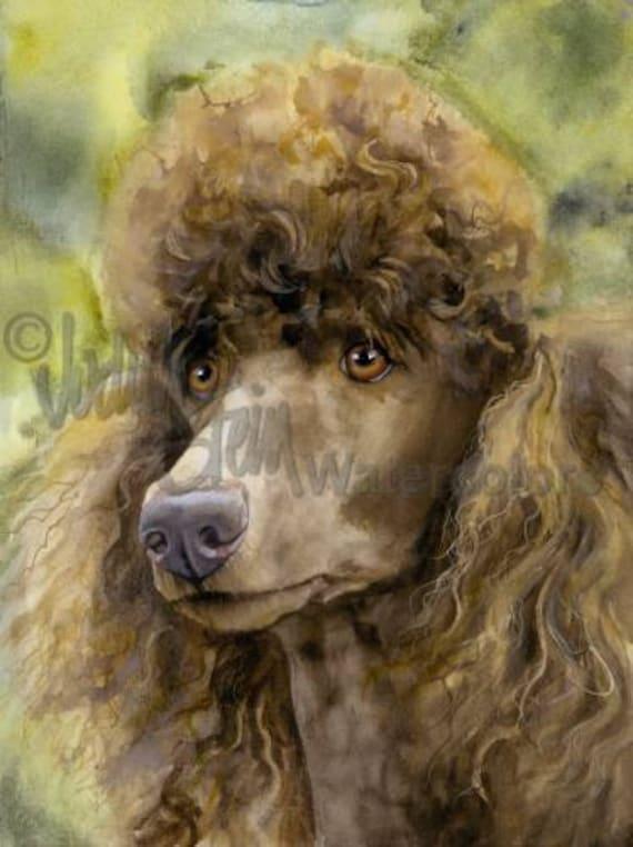 Poodle Standard Brown Cafe Au Lait Akc Non Sporting Pet