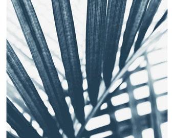 Nature Photograph - Palm Tree Print - Tropical Print - Botanical Photograph - Blue Palm #3 - Fine Art Photograph - Cyanotype - Wall Art