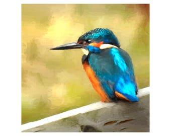 Kingfisher 6x6 inch Giclee Print