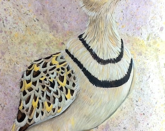 Double Banded Courser Original Painting