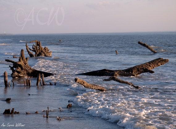 Bone Yard Beach on Hunting Island South Carolina 2 (PR) (canvas)