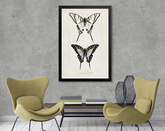 Vintage Butterfly Illustration Print, Butterfly Watercolor Vintage drawing, Butterfly Multicolored water color art, vintage home decor [1]