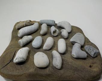 "17 Beach Fossil Stones 1.1-2""/2.7-5.2cm Fossil Pebbles  - Decorative Beach Finds - Beach Fossil Finds #196"