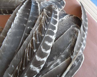 "feathers""Eagles"" Indian pow wow (2) authentic! """