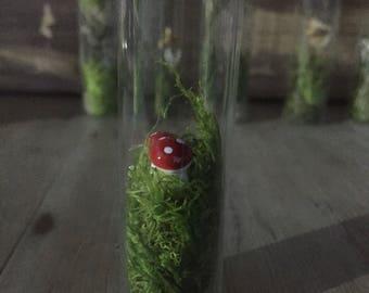 Tiny Toadstool Terrarium Vial