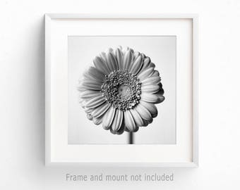 Square Print, Flower Print, Black White Print, Flower Photograph, Floral Wall Art, Bedroom Wall Art, Romantic Art, Modern Wall Art Picture