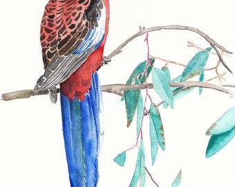Rosella bird print, gift for mum, Australian bird art, Parrot illustration, tropical wall art, mother's day gift, tropical bird decor