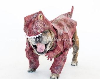 Rarrr!!! English Bulldog Print, Fine Art Photography Print, Purrfect Pawtrait Pet Photography, Animal Photography