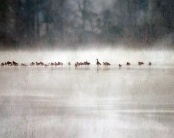 Photography, Frimas, landscape photography, Ducks, Frozen River, Winter Season, Fog, Fine Art Print, Shabby Chic, Cottage decor.