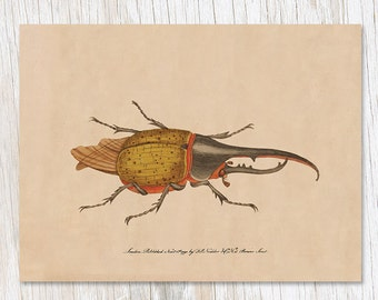 Hercules Beetle Greeting Card | Entomology Insect Bug Stationery Biology Science Gift Nature Card, Bug Card, Gardener, Science, Ecology Card