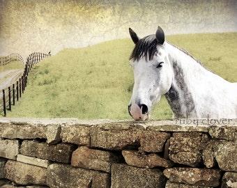 Horse and Bird, Horse Photo, Irish Countryside,Ireland Farm,Green Pasture,Animal Photography,White Horse,Ireland Stone Wall,Bird on a Fence