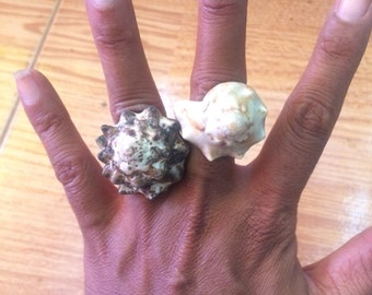 Real Conch Sea Shell Ring, shells ring, shells rings, shell ring, Conch ring, Conch rings, size 8, 8.5, 9 available first photo