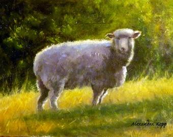 Standing Sheep giclee 8x10 by Alexandra Kopp