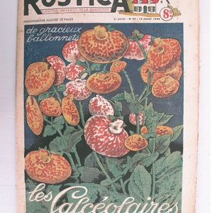1948, French review, RUSTICA, Calceolar, antique French flower illustration, calceolarias