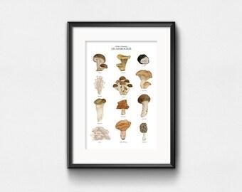 Comestibles cultivées champignons Art Print | Art de l'aquarelle | Infographie champignons graphique | Wall Decor | Lettrage à la main | 11 x 14 | 13 x 19