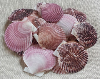 Small Shells, Craft Shells, Beach Decor, Seashells, Shells, Home Decor, Purple Pecten Scallop Shell