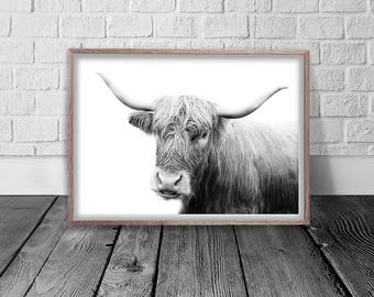 Cow Print, Bull Digital Print, Farm Animal, Highland Cow, Digital Download, Printable Wall Art, Cow Poster, Cattle Photography, Zoo Art