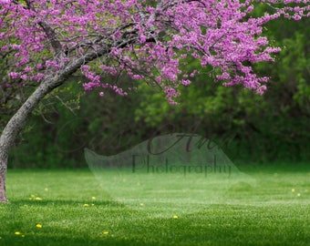 Spring Tree and Dandelions Digital Photography Backdrop Background
