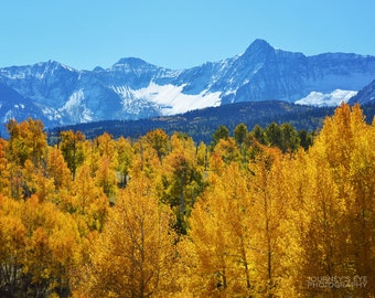 Mountain landscape photography, Colorado photograph, mountain art, fall decor, nature print - Forests of Gold