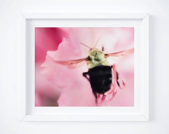 Bee Art, Bumblebee Photography, Insect Picture, Pink Wall Art, Nature Home Decor, Floral Print, Botanical Art - Girlfriend photo gift